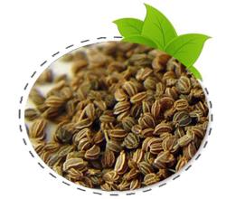 celerey-seed