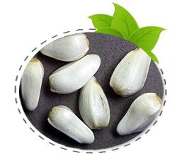 saflower-seed
